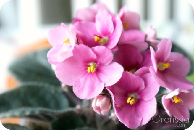 Kukka1.jpg