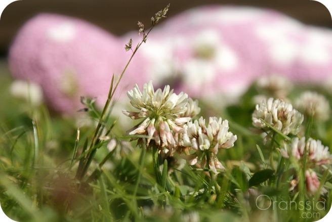 afrikan kukka